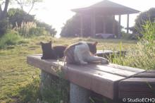 優雅なネコ達