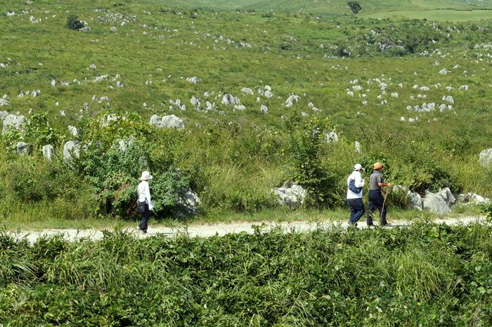 秋吉台遊歩道を散策