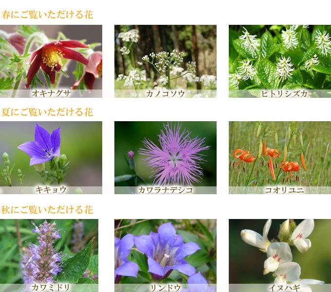 秋吉台の季節の花