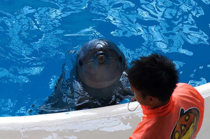 イルカの餌やり