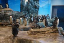ペンギン村の住人達