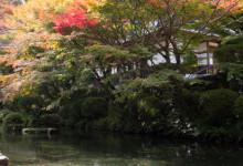 本堂前の池