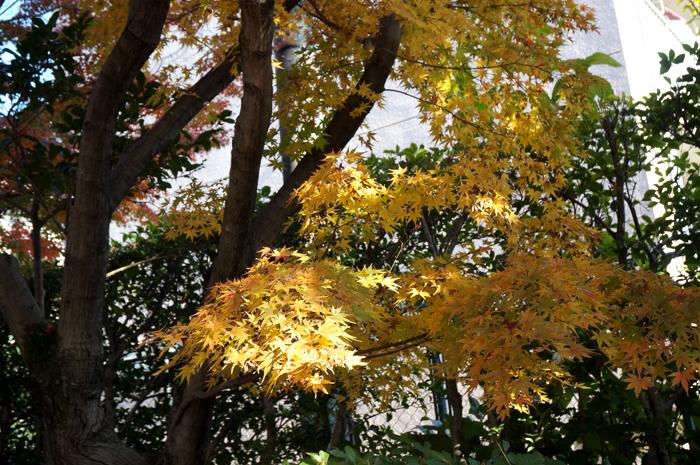 龍福寺の紅葉