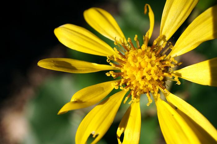 龍福寺で咲く花